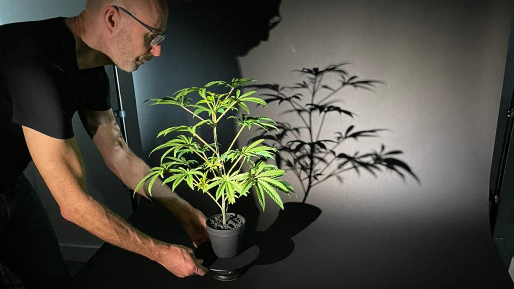 Product videography filming a artificial marijuana plant
